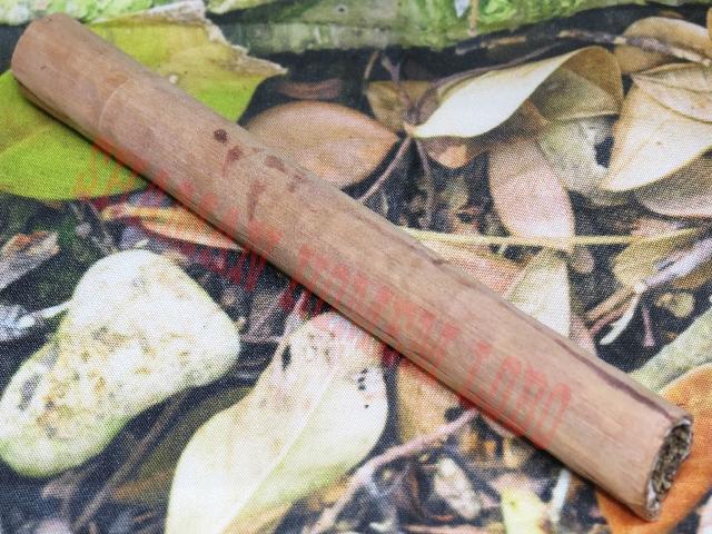 Charuto Tauari Indígena Amazônia